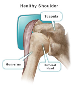 Shoulder-Anatomy-labeled
